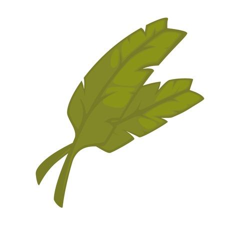 Green leaves cooking seasoning ingredient. Realistic vector Illustration