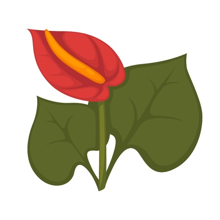 red leaves: Anthurium andraeanum red flower with green leaves isolated on white Illustration