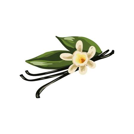 Vanilla pods, orchid flower and green leaves isolated on white Illustration