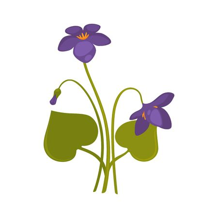violet: Violet flowers isolated on white background vector picture
