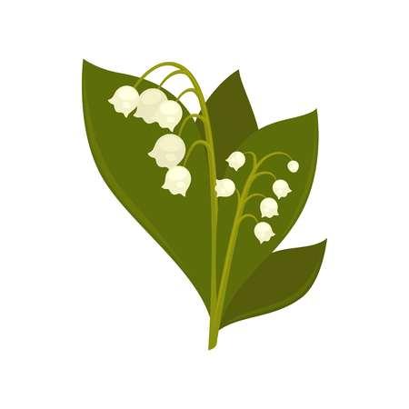 Zweige der Nahaufnahme Lilie des Tales isoliert Bild Illustration