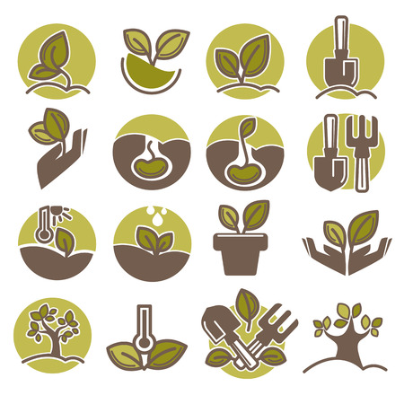 plant seed: Tree planting and growing process infographic vector icons