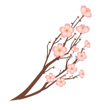 branch isolated: Colorful close up sakura branch isolated on white background