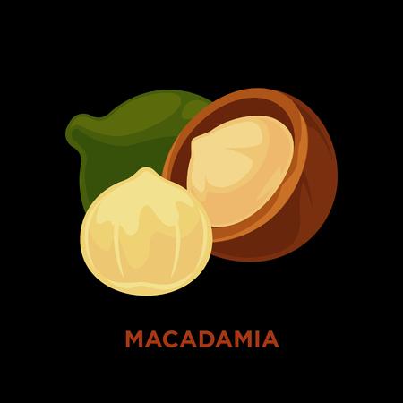 nuts: Macadamia nut isolated on white.
