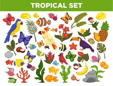 leaf: Tropical and exotic fruits, birds, fishes and plants vector set Illustration