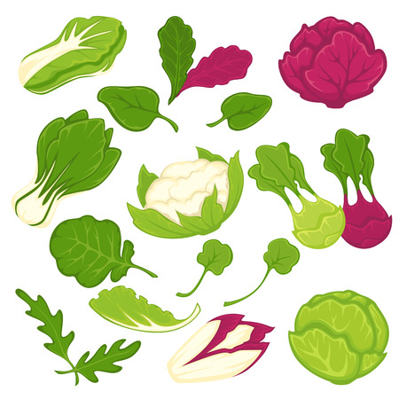 Lettuce salads leafy vegetables vector isolated icons set Illusztráció