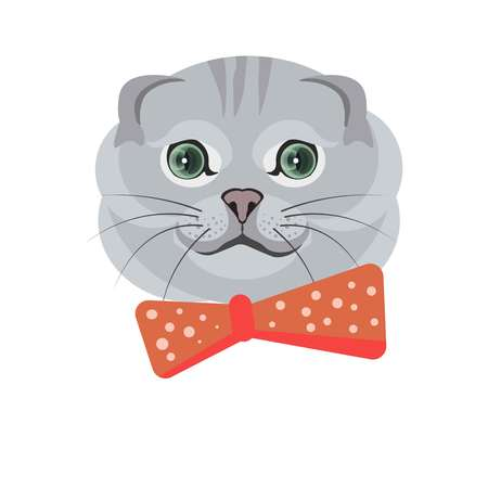 Scottish fold breed of cat in grey color on white Vectores