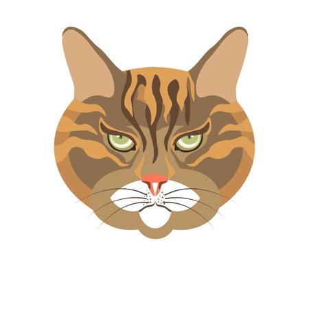 Abyssinian old cat colorful portrait isolated on white