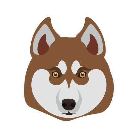 light brown hair: Siberian Husky purebred breed close up dog portrait on white. Isolated domestic animal head with small round hazel eyes, black nose, light grey and brown hair vector illustration in flat design