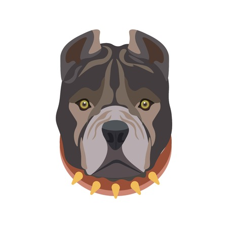 triangular eyes: American Pit Bull breed barking domestic animal wearing ruddy dog collar with some golden sharp elements. Illustration