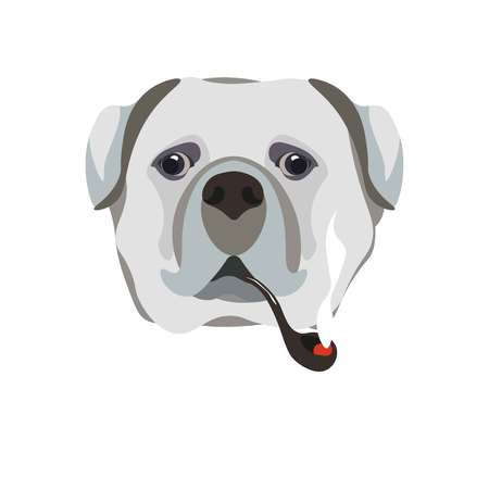 Bullmastiff breed dog holding smoking pipe in mouth close up portrait on white. Illustration