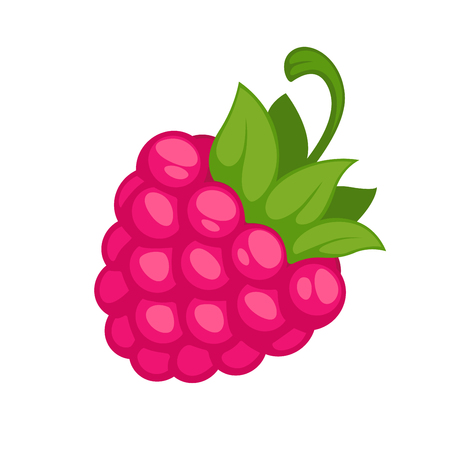 fruit stem: Pink wild raspberry with green stem isolated on white. Fresh organic ripe fruit realistic vector in flat style. Illustration