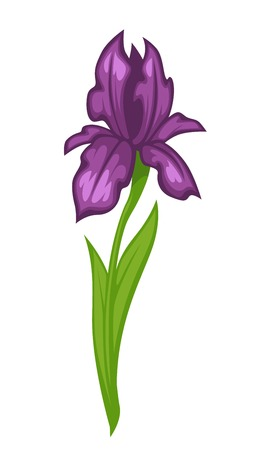 Flower iris blossom bud or bloom vector flat isolated icon Illustration
