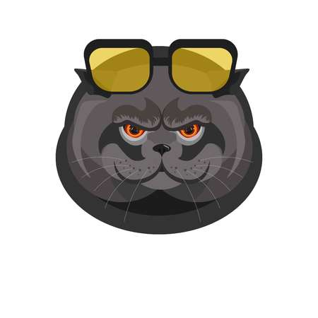 Black cat with sunglasses in dark frame portrait isolated on white.