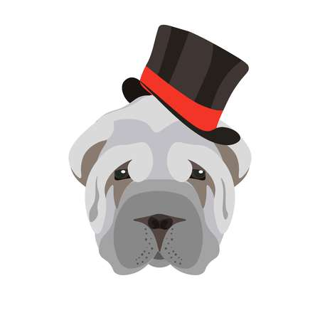 sharpei: Sharpei dog head with grey coat and long black hat with red wide stripe isolated on white.