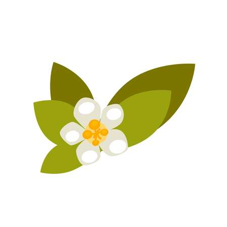 tropical: Vanilla flower with green leaves isolated on white background. Plant in blossom with yellow middle center vector illustration. Decorative blooming element in flat design, stylish floral decor Illustration