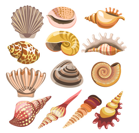 Colorful Shells or seashells vector isolated icons