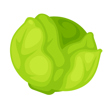 food: Green organic cabbage Illustration