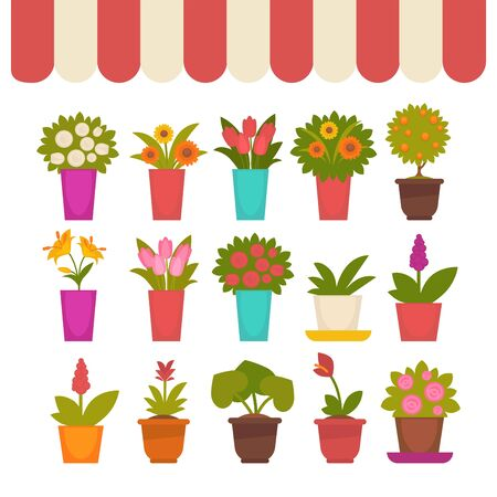 Flowers in pots vector set under clothing cover