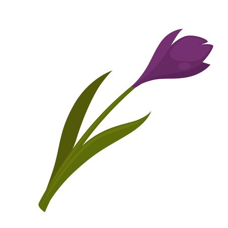 flower blooming: Pretty blooming purple flower Illustration