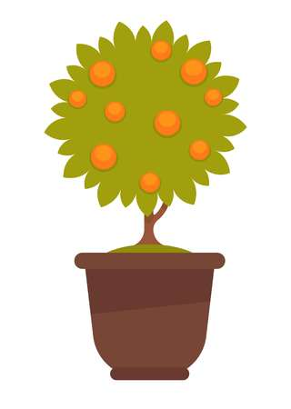 Vector illustration of a potted tree with oranges growing isolated on white.