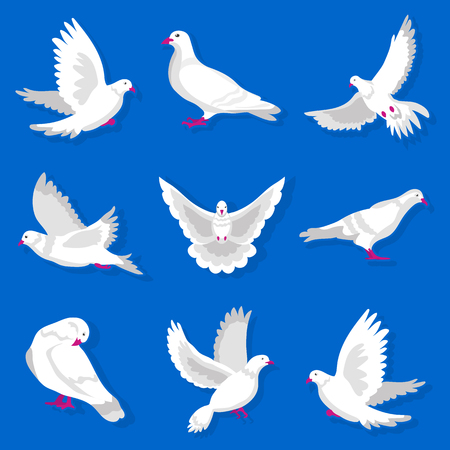 빨간색 부리와 발 일러스트와 함께 흰색 만화 비둘기 설정