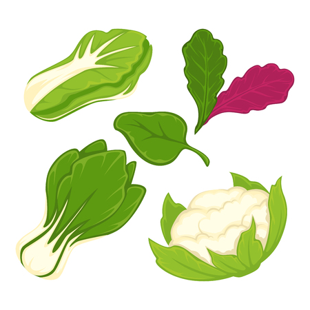 chinese spinach: Lettuce salad vegetables vector isolated flat icons set Illustration