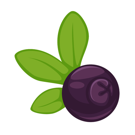 Blueberry dark purple fruit with green leaves isolated illustration Illustration