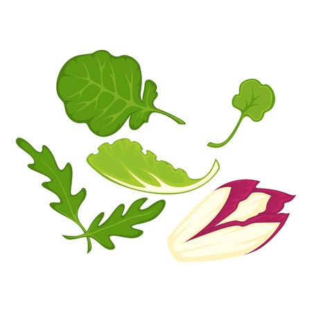 Healthy organic salad leaves cartoon isolated illusrations set