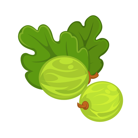Two green gooseberries with leaves isolated on white