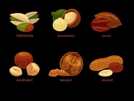 Nut set. Ripe nuts and seeds vector illustration. Ilustração