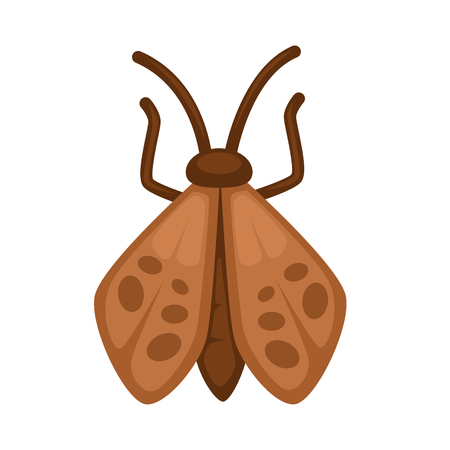 butterfly background: Brown moth with dark stains on wings and long straight antennae and thin paws isolated cartoon vector illustration on white background. Butterfly without bright pattern that flies only at night.