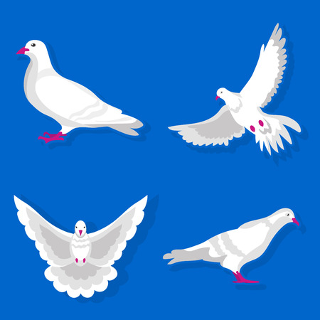 Graceful white pigeon stands, spreads wings and flies isolated vector illustration on blue background. Tender bird that symbolizes peace and freedom. Cartoon dove from different foreshortening. Illustration