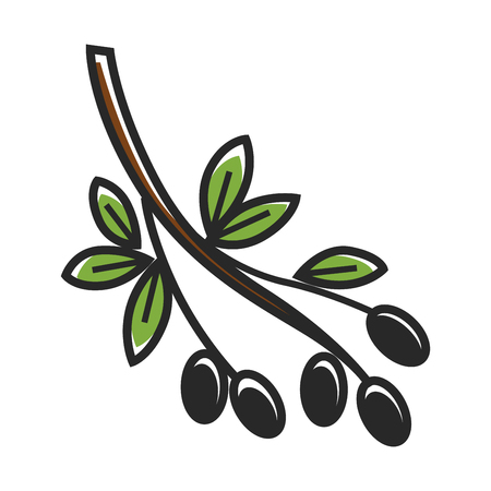 Olive tree branch with leaves and fruits isolated illustration Illustration