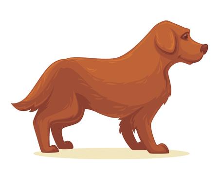 labrador: Vector illustration of cartoon dog. Isolated Illustration