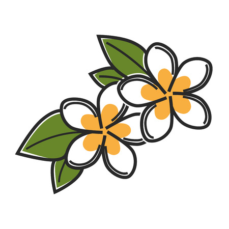 Aromatic vanilla flowers with green leaves isolated illustration