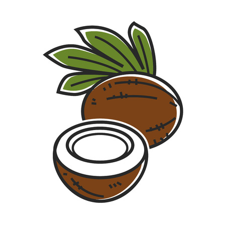 Delicious coconut with palm leaves isolated cartoon illustration