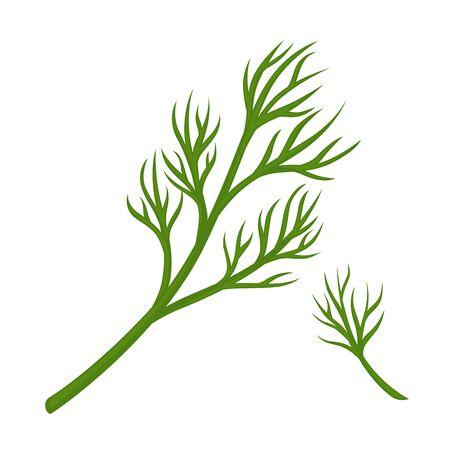 Green dill branch