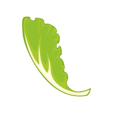 Vector illustration of fresh green salad leaf isolated on white.