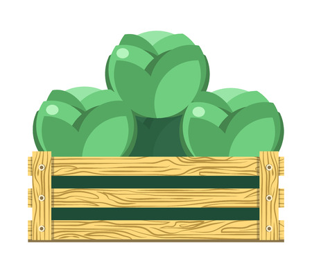Green leafy cabbage in wooden box isolated illustration