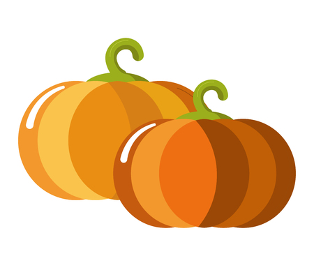 Ripe juicy sweet pumpkins with curled stem isolated illustration