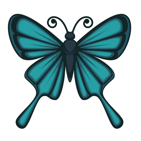 butterfly isolated: Vector illustration of butterfly with beautiful blue wings isolated on white.
