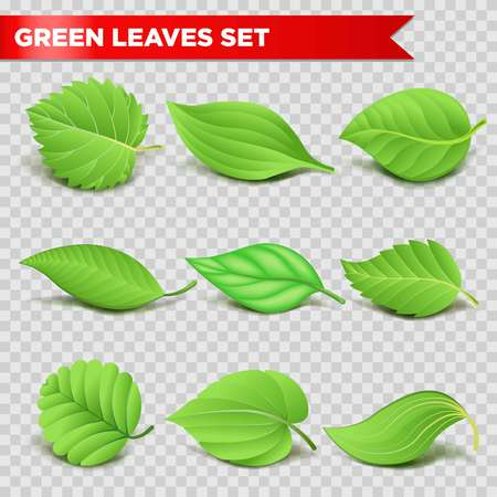 aspen tree: Green leaf 3D logo template for eco environment, nature ecology and energy or bio food product symbol.