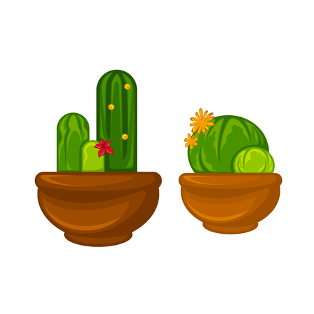 Pots plants with flowers and leaves set. Vector illustration. Illustration