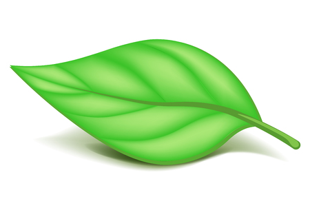 Oblonged green leaf on small stem isolated illustration