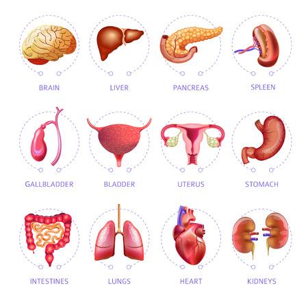 Menselijk lichaam interne organen pictogrammen instellen