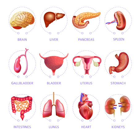 Human body internal organs icons set