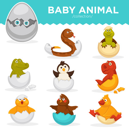 Baby animals hatch eggs cartoon pets hatching vector flat isolated icons Illustration