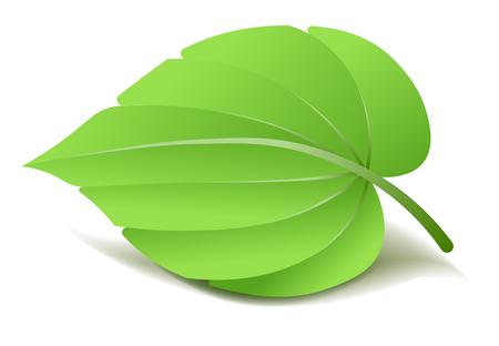 vegetate: Realistic Green Leaf. Vector Illustration isolated Illustration