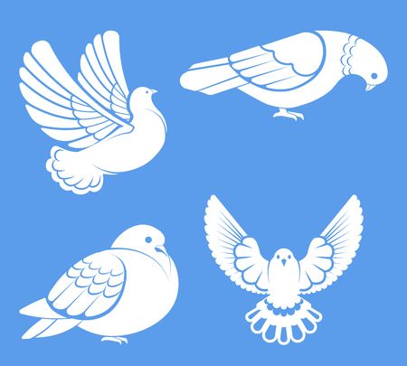 Pigeon or dove, white bird flying with spread wings in sky or sitting set. Illusztráció